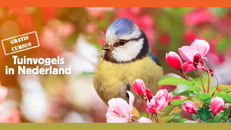 Gratis cursus Tuinvogels in Nederland